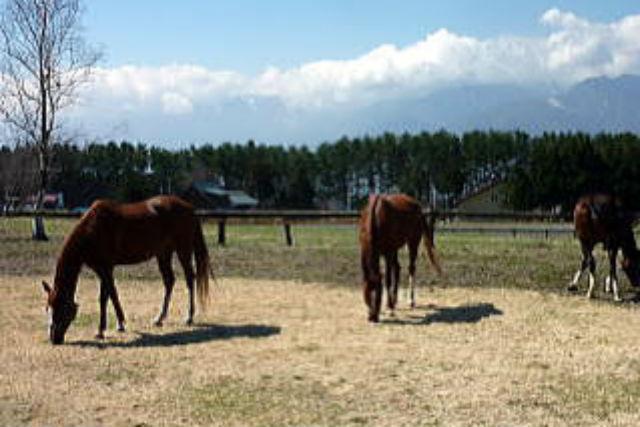 【山梨・ホーストレッキング・乗馬】初心者も経験者も!清らかな女取湧水・信玄の棒道コース