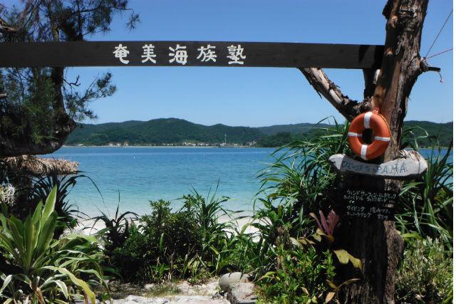 【奄美大島・体験ダイビング】海抜0m以下の楽園へ!体験ダイビングで味わう感動体験