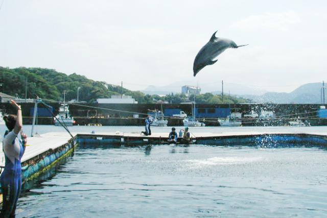 【東京 渋谷発・東伊豆】イルカと泳ぐ!日帰りファンダイビング