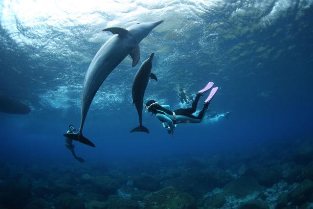 【東京・御蔵島・イルカウォッチング】高確率でイルカに会える!御蔵島でドルフィンスイム!