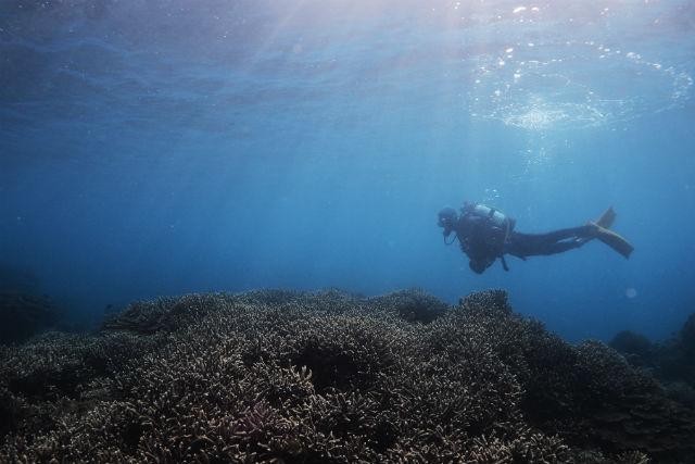 【和歌山・体験ダイビング】本州最大のサンゴ礁へ!串本で体験ダイビング(2ダイブ)