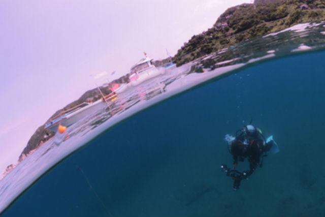 【和歌山】由良町海域・ファンダイビング(水中カメラ付・初級者向け・ボートダイビング)