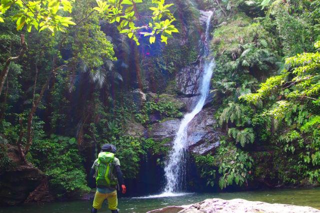 【沖縄・名護・トレッキング】やんばるの山でジャングル大冒険!童心にかえる探検ツアー!