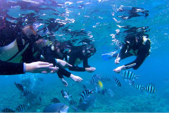 【沖縄・恩納村・体験ダイビング】熱帯魚に餌付けをしよう!トロピカルフィッシュプラン