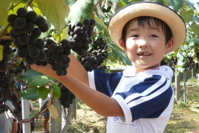 【青森・農業体験】食べ物にシミジミ感謝。美味しい思い出をつくろう