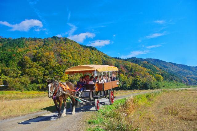 【京都・観光馬車】優しい気持ちに包まれる。ノスタルジックな馬車の旅(トロッコ亀岡駅発着・約15分)