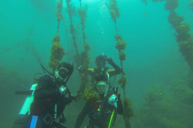 【鹿児島・ファンダイビング】フェリーで観光気分も満喫しよう!桜島からの2ビーチダイブ