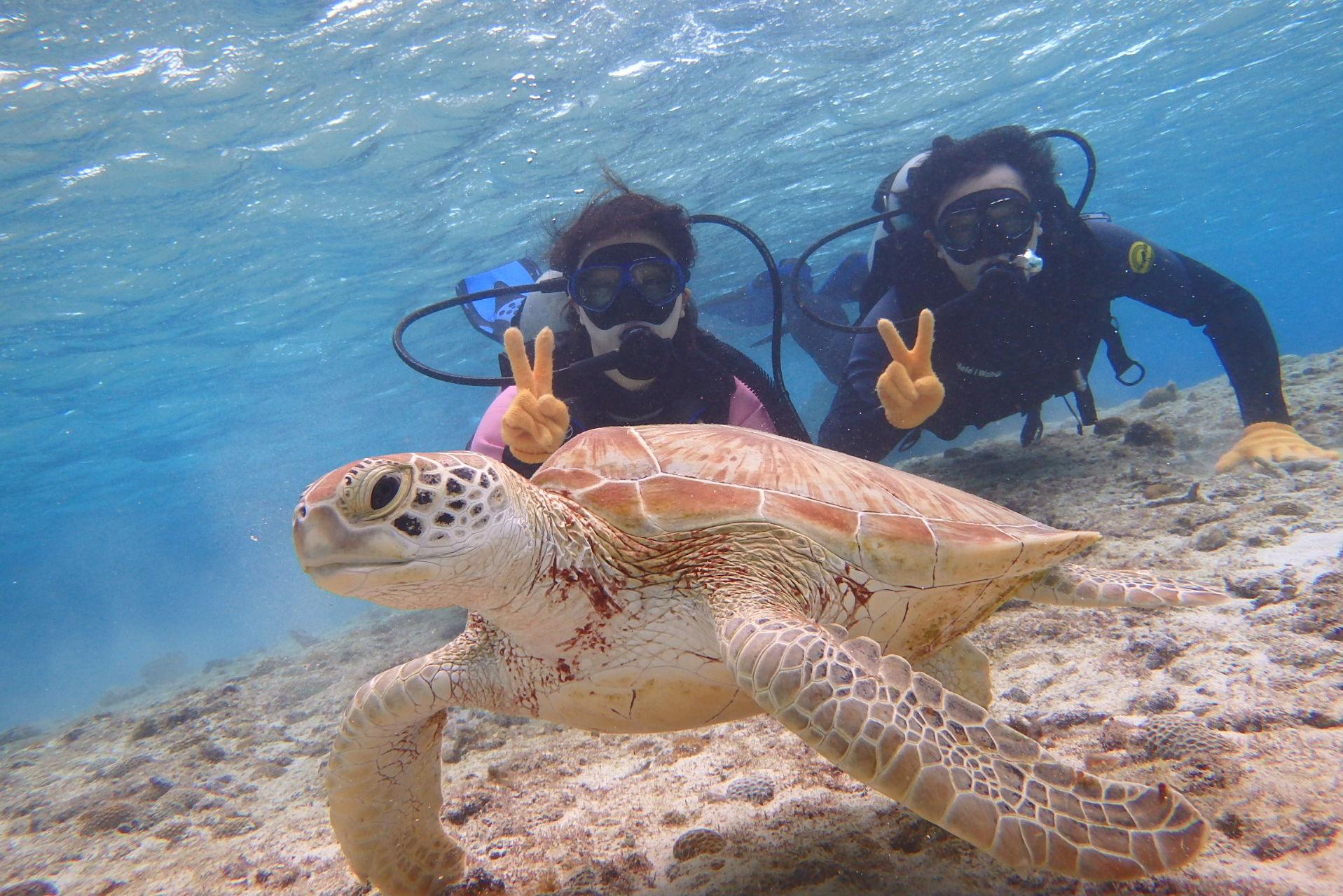 【沖縄・宮古島・体験ダイビング】ウミガメと写真を撮ろう!ウミガメプラン