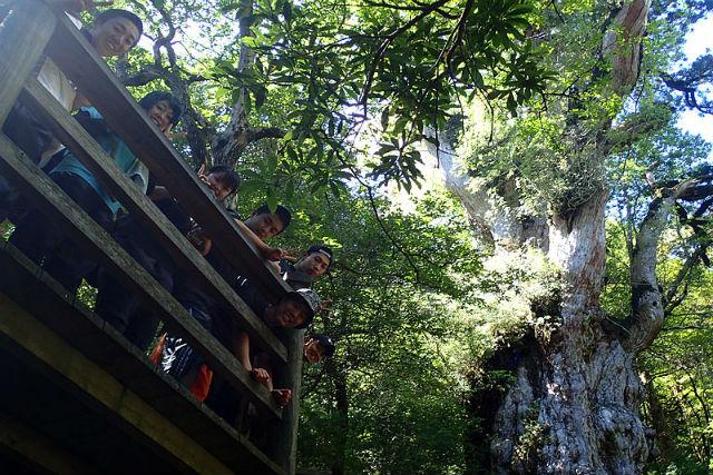 【鹿児島・屋久島・トレッキング】樹齢7200年の縄文杉を見に行くトレッキングツアー!