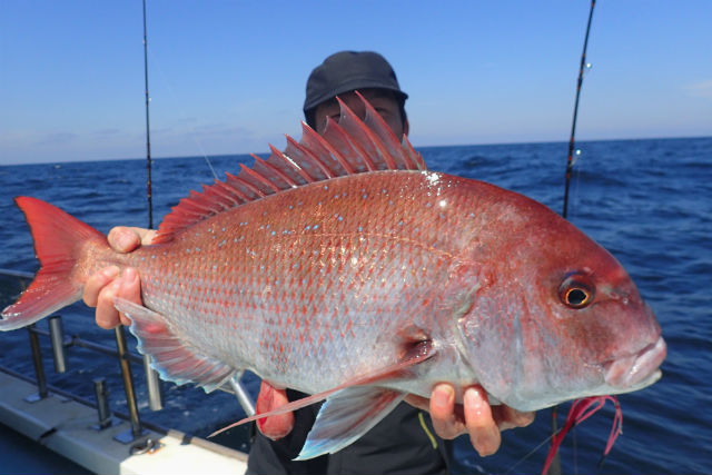 【京都・釣り体験】伊根で魚釣り体験(鯛ラバーでマダイ狙い)プラン!(乗り合い)