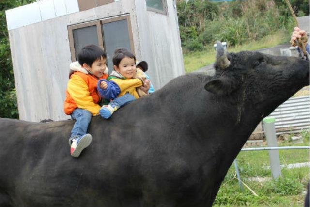 【沖縄・うるま市・牧場体験】闘牛のお世話をしよう!3歳から参加OK、ふれあい体験