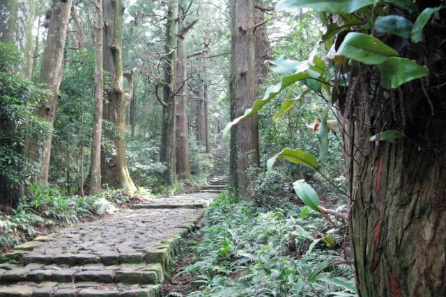 【和歌山・熊野古道・トレッキング】日本三大古道・大門坂コース(50分)