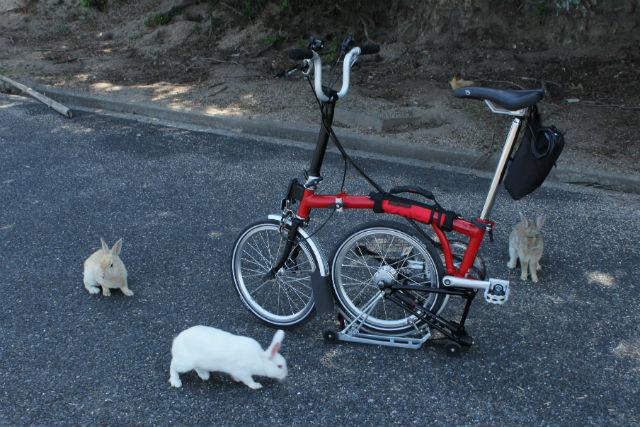 【広島・生口島発着・ポタリング】うさぎの楽園で癒しの自転車散歩!大久野島ポタリングツアー