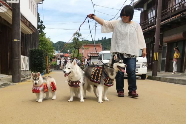 【鳥取・変身写真】わんこ武将と一緒に、白壁土蔵群をお散歩しよう!