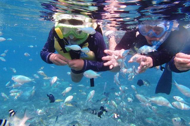 【沖縄・本部町・ビーチシュノーケリング】子供も大人も海が大好きに!のんびり熱帯魚ウォッチング