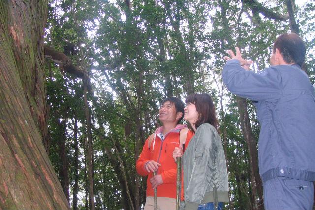 【高知・トレッキング】えっ!こんな森が高知にあったの!?天然杉巨木郡の森を歩く