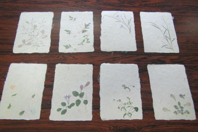 【高知・紙すき体験】土佐和紙を使った紙すき体験!ハガキ・色紙などを作れます