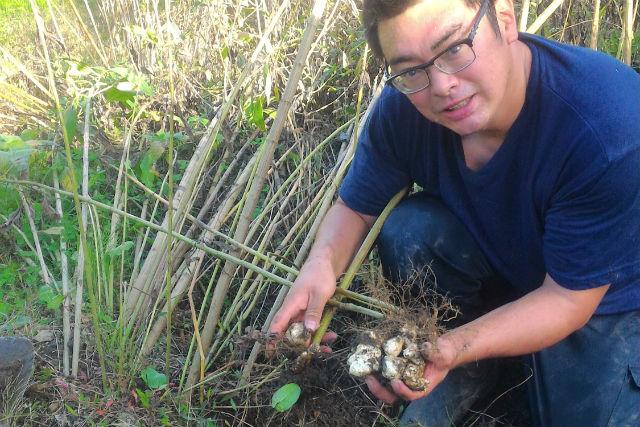 【岐阜・恵那市・芋掘り】日本の原風景を見ながら!棚田で菊芋堀り体験