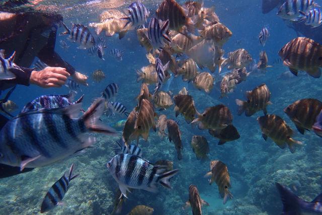 【沖縄・恩納村・体験ダイビング】青の洞窟or熱帯魚シュノーケル&体験ダイビング