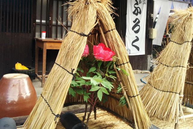 【愛媛・エコツアー】「冬ぼたんまつり」入園券+カフェセットが付いた、お得なプラン!