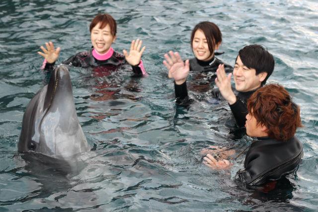 【高知・室戸・イルカツアー】室戸岬でイルカと泳ごう!ドルフィンスイム