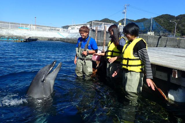 【高知・室戸・イルカツアー】室戸岬でイルカと遊ぼう!ふれあい体験