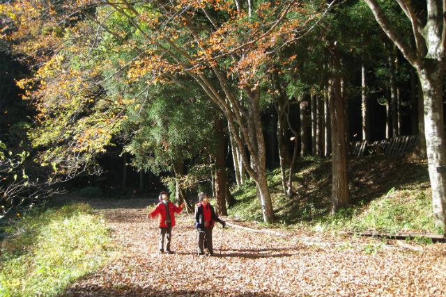 【島根・飯南町・森林セラピー】静かな森に心癒される。飯南町・森林セラピー