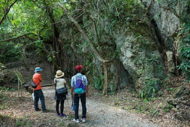 【沖縄・南部・エコツアー】「いやしのホロホローの森」を散策しよう!