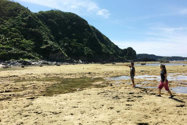【沖縄・自然体験】大潮限定!潮溜まりエメラルドの海でお魚見学ツアー