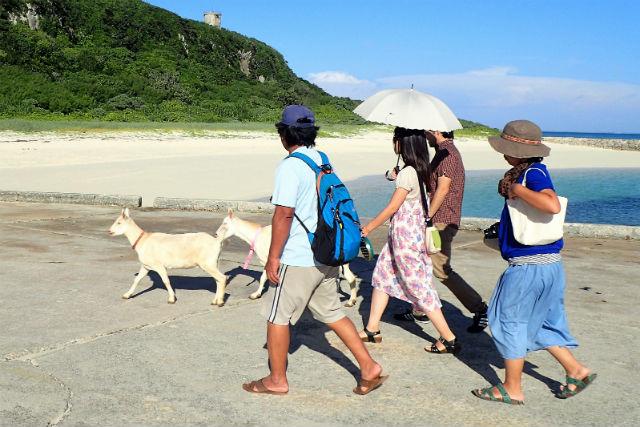 【沖縄・宮古島・ガイドツアー】ガイドと一緒に来間島を歩こう!島さんぽを満喫