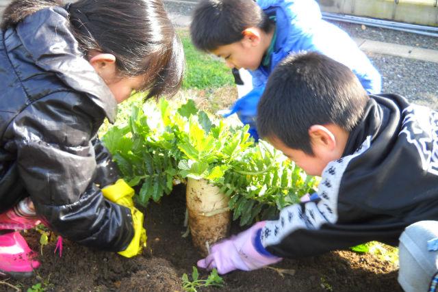 伝統野菜 佐波賀だいこんの郷で学ぶ おばんざいレシピ