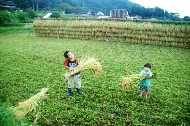 日本昔の田舎体験 稲刈り・天日干し体験
