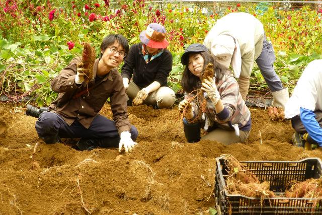 水源の里・市志で「稲木干し米」を作ろう( 稲刈り・サツマイモ収穫体験)