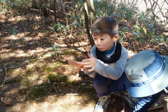 【高知・トレッキング】日本一小さな村でドングリの森を歩いて幻の黒牛を食す!
