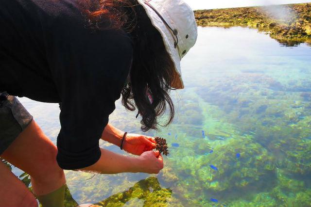 【沖縄・糸満市・エコツアー】サンゴを育てよう!サンゴの植え付け体験