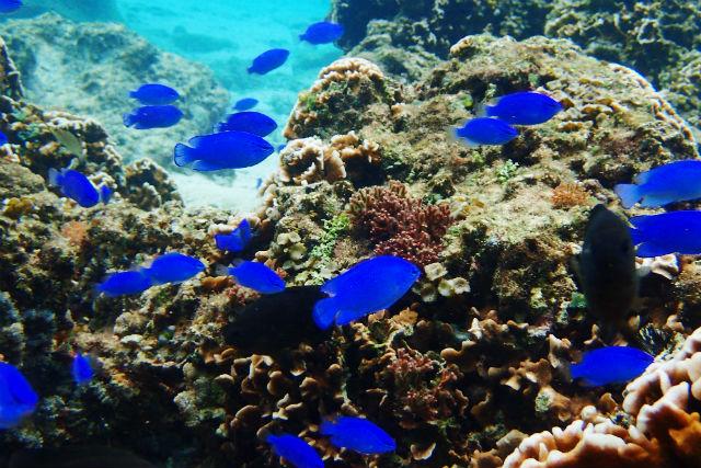 【沖縄・シュノーケリング】サンゴとお魚を見に行こう!シュノーケリングツアー(写真撮影付き・貸切)