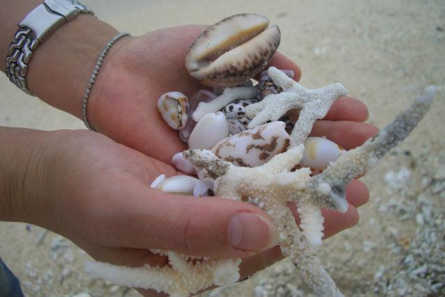 【沖縄・西表島・グラスボート】パナリ島のサンゴを見に行こう!グラスボートツアー