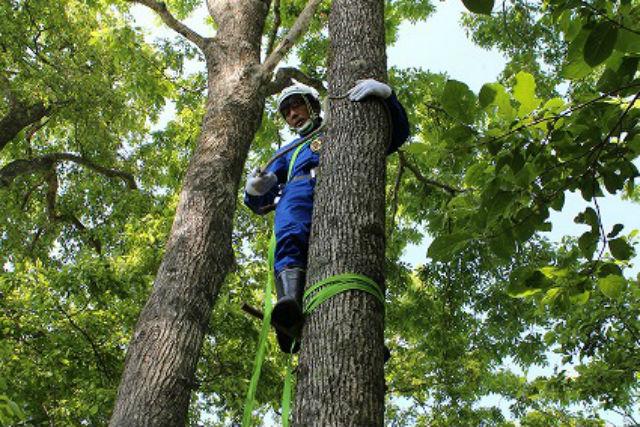 【北海道・木登り】ロープでの木登り術をマスター!山菜オヤジが教えるツリー・クライミング(温泉券付き)