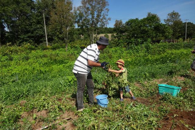 【北海道・農業体験】家族みんなで楽しめる!旬の野菜を収穫しよう