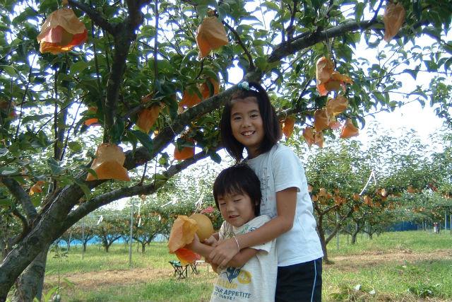 梨食べ放題!&採った梨でしぼりたてのジュース作り体験