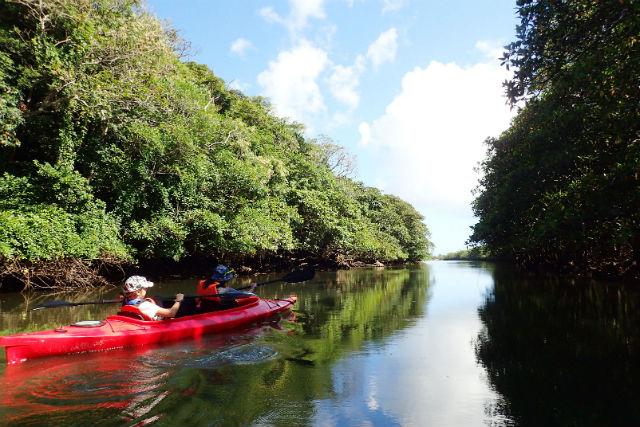 【沖縄・西表島・カヌー】ジャングルを冒険!西表カヌー&ジャングルアドベンチャーツアー(A-2コース)