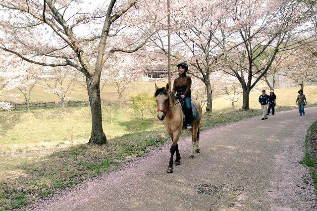 【岡山・乗馬体験】馬に乗って園内をお散歩!乗馬体験&園内散策プラン(40分)