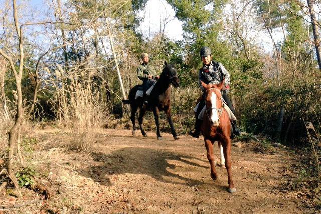 【岡山・乗馬体験】馬と山道を歩こう。ホーストレッキング体験(50分)