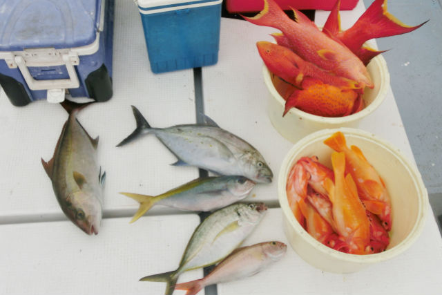 【小笠原・海釣り体験】二見湾で高級魚シマアジを狙う!船揺れ少なく、初心者にも安心です