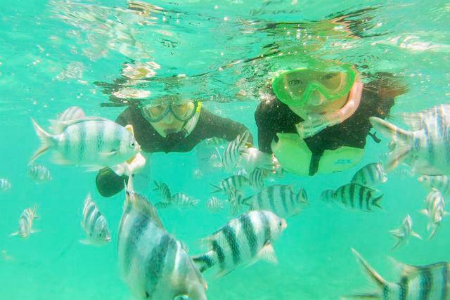 【長崎市・シュノーケリング】長崎の海を探検!シュノーケリング&海辺の生き物観察