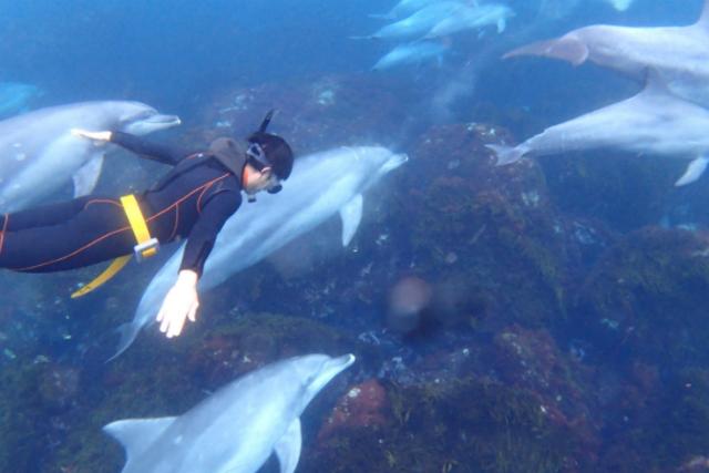 【東京・利島・イルカウォッチング】船とシュノーケリングでイルカに会いに行こう!
