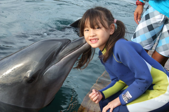 【静岡・伊東市・イルカウォッチング】写真撮影もOK!イルカ触れ合いコース