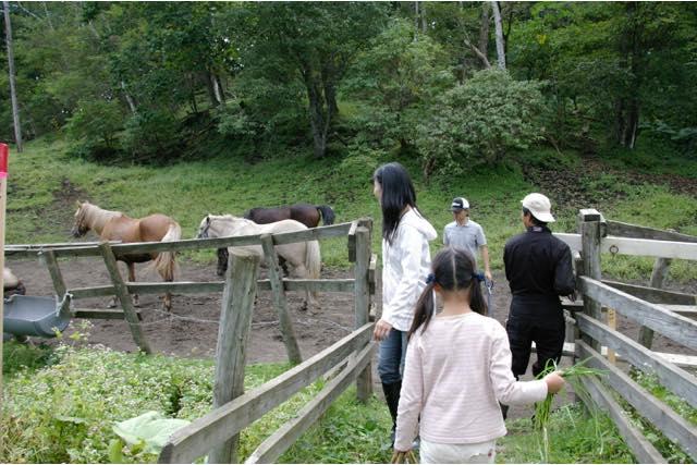 【北海道】馬のお世話&牧場で乗馬。初心者Aコース(90分)