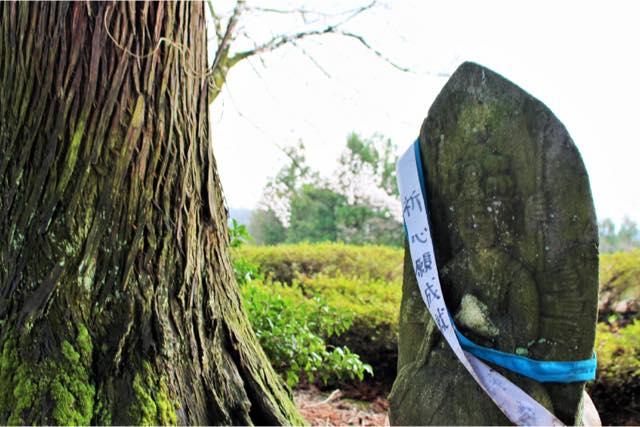 【富山】眼目立山寺で森林セラピー。森の観音さまウォーク(150分)