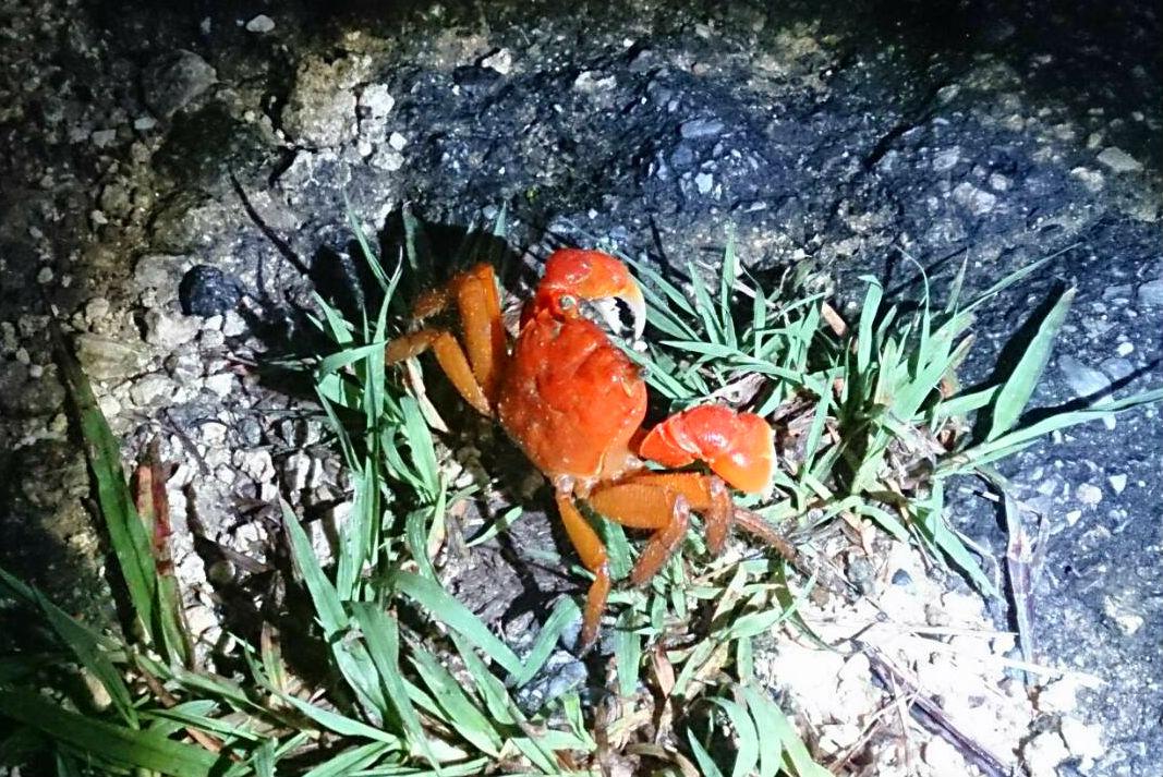 【沖縄・西表島・ナイトツアー】珍しい動物や美しい星空を満喫!ジャングル探検ナイトツアー